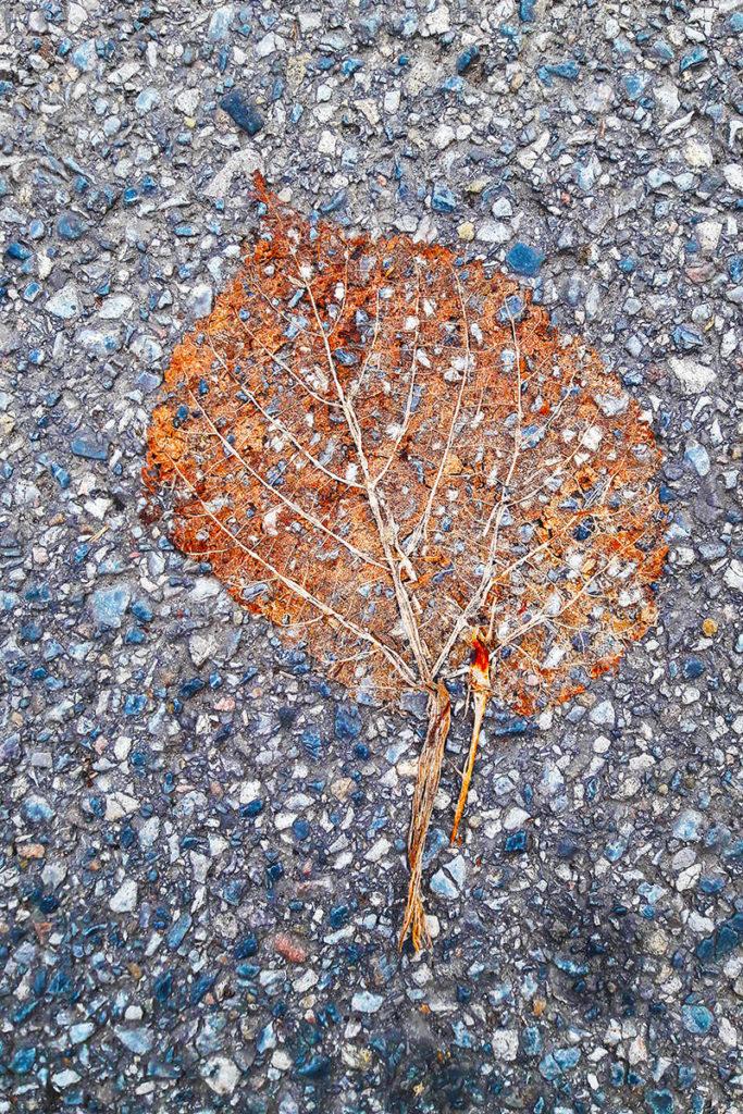 ein Blatt im Asphalt eingeschmolzen